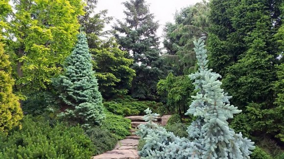 Dwarf Conifer Garden in spring.
