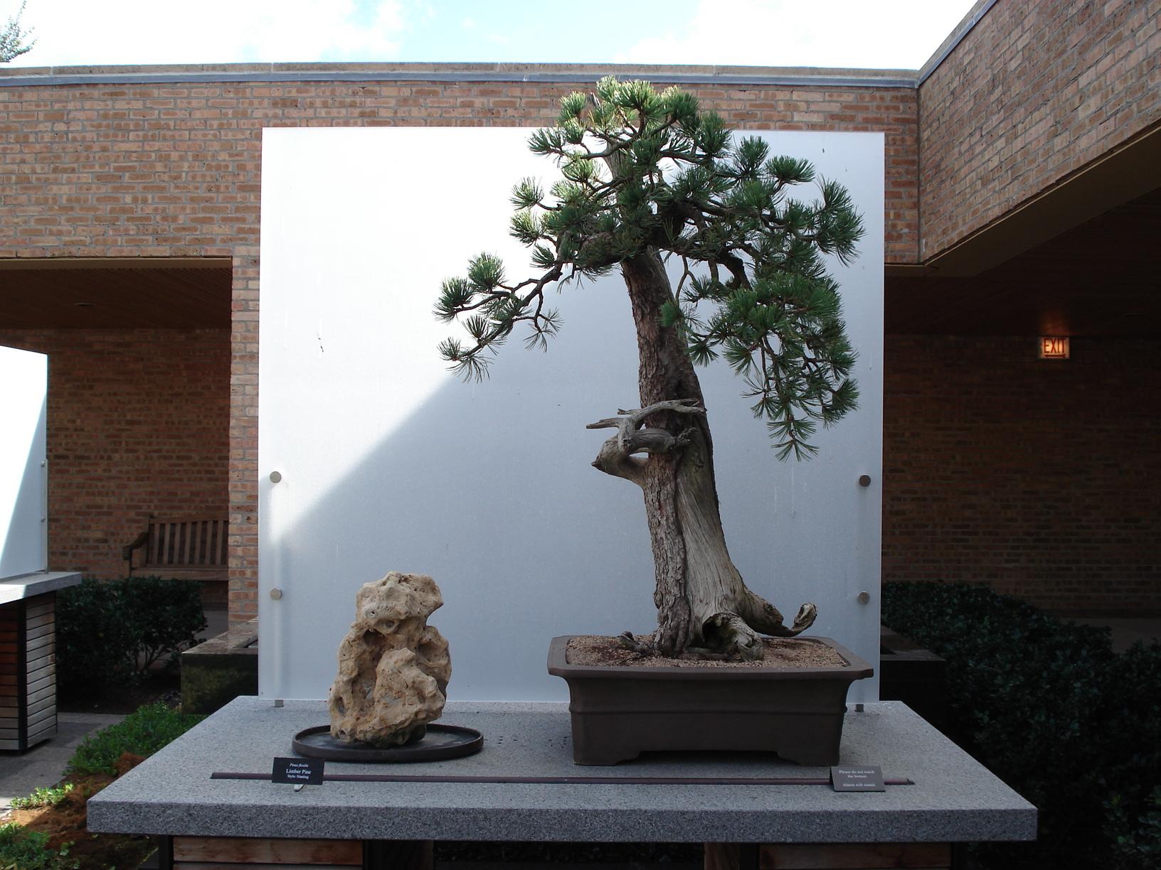 Bonsai Master Walter Pall Visits The Chicago Botanic Garden My Chicago Botanic Garden