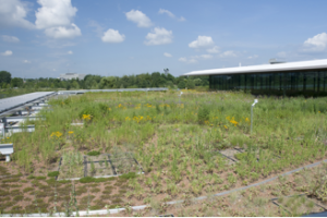 Ellis Goodman Family Foundation Green Roof Garden South in July 2011