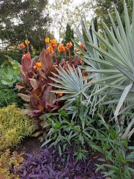 The same care tips also apply to overwintering tropical plants such as palms and bromeliads