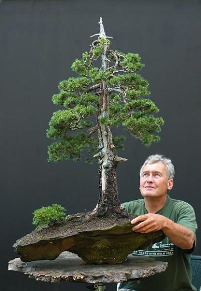 PHOTO: Bonsai Master Walter Pall contemplates his work.