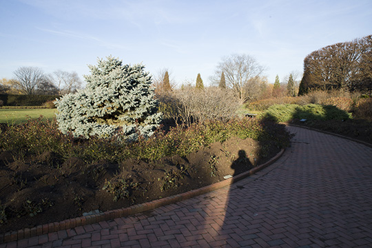 View 4: The Rose Garden in winter