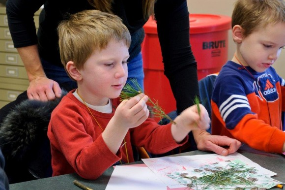 A student in class is examining evergreen needles.