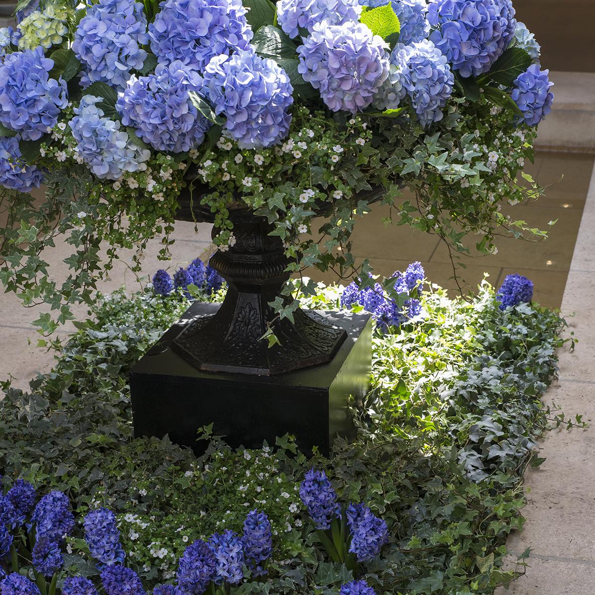 PHOTO: Blue hydrangea planter by Craig Bergmann Landscape Design.