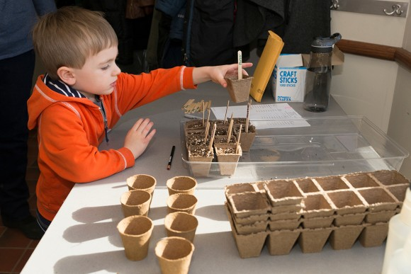 PHOTO: Our young grower adds his pot to the tray. It's a good idea to pot up extra seeds in case some don't germinate.