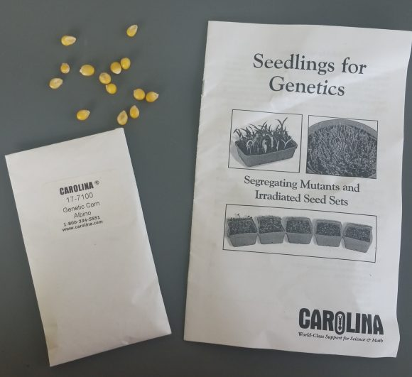 PHOTO: A packet of genetically modified corn seeds and instruction booklet
