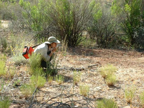 PHOTO: Dr. Andrea Kramer at Arches National Park.