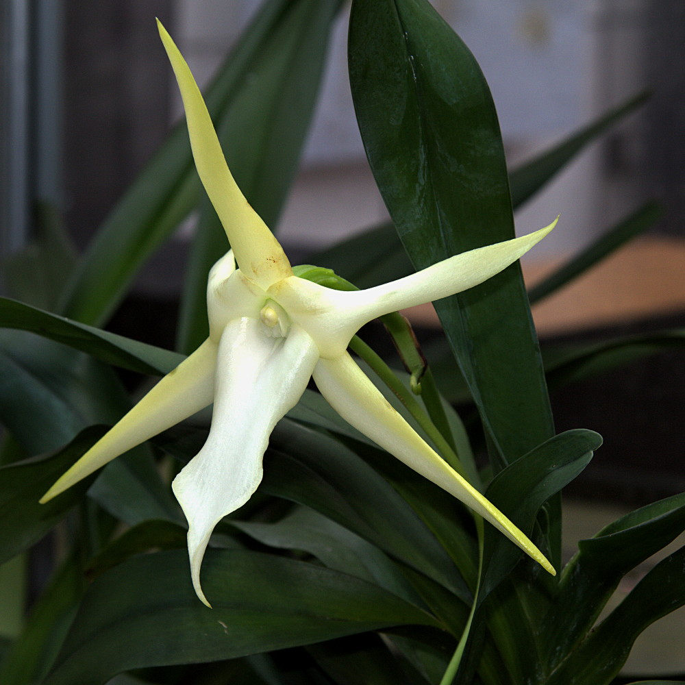 Darwin's Orchid and the Wardian Case