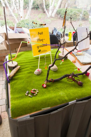 PHOTO: A strip of astroturf is covered with an excercise course for ants made from twigs, stones, and other natural objects.
