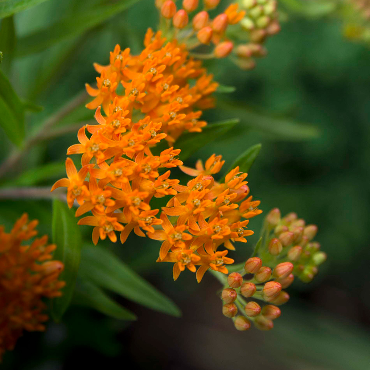 What Are the Best Plants for Your Midwestern Garden?