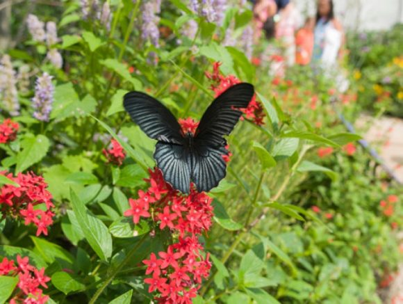 """Watching butterflies is one of the many ways nature provides us with """"soft fascination."""""""