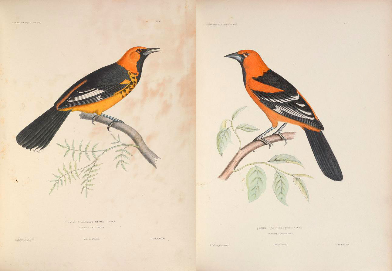 Documenting—and Digitizing—Biodiversity