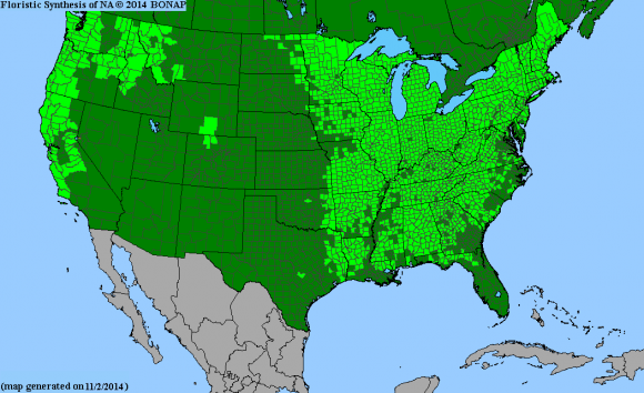 Biota of North America Program (BONAP) map of Trillium in the United States