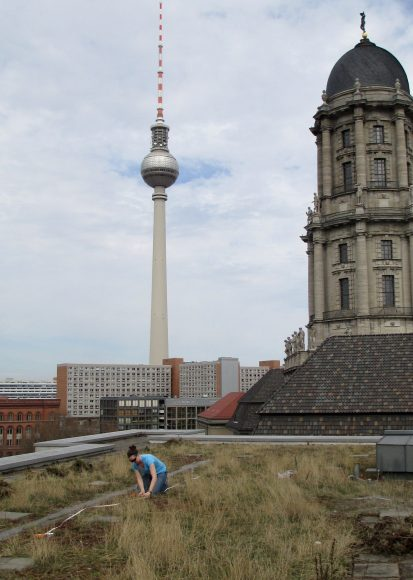 Setting up insect traps in 2013 on a green roof on top of the Berliner Wasserbetriebe building in downtown Berlin