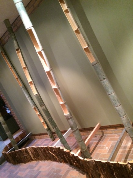 PHOTO: Notched bamboo supports await orchid plantings.