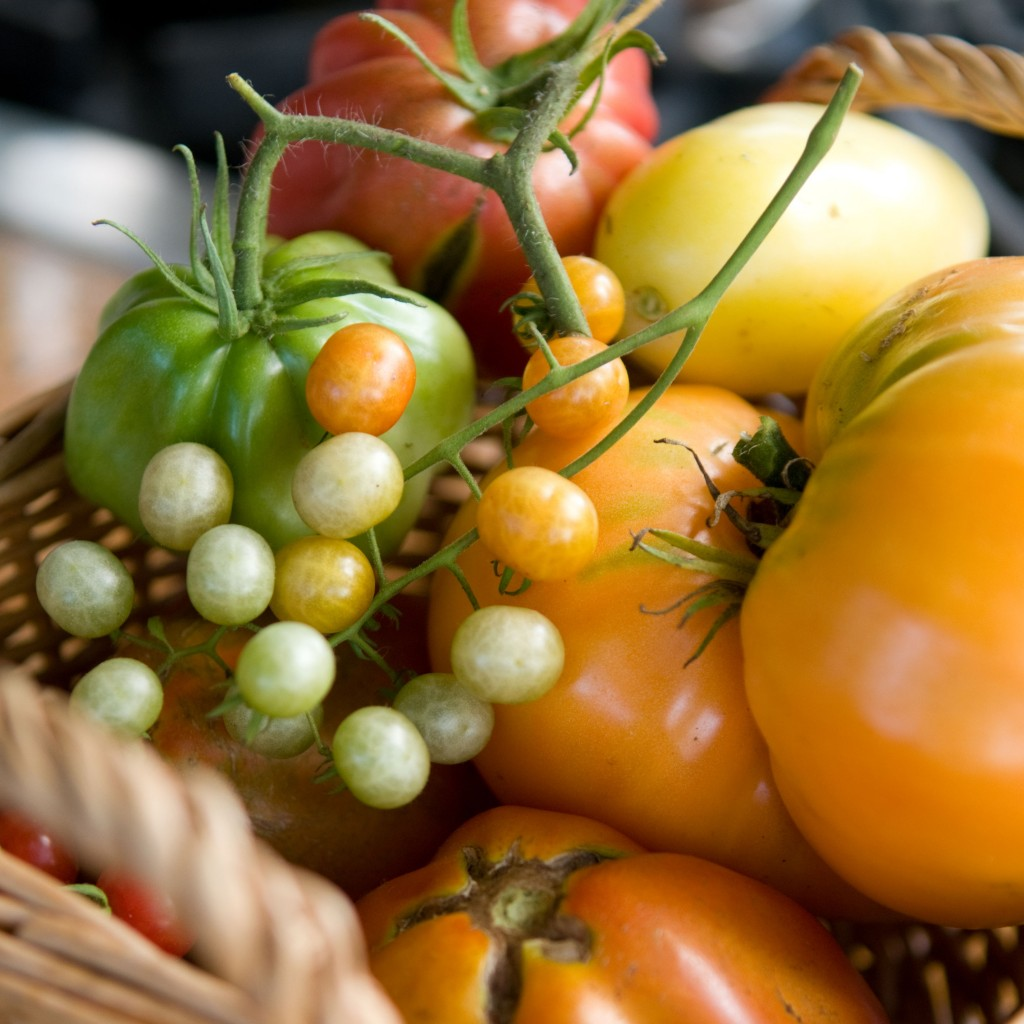 PHOTO: Basket of tomatoes.