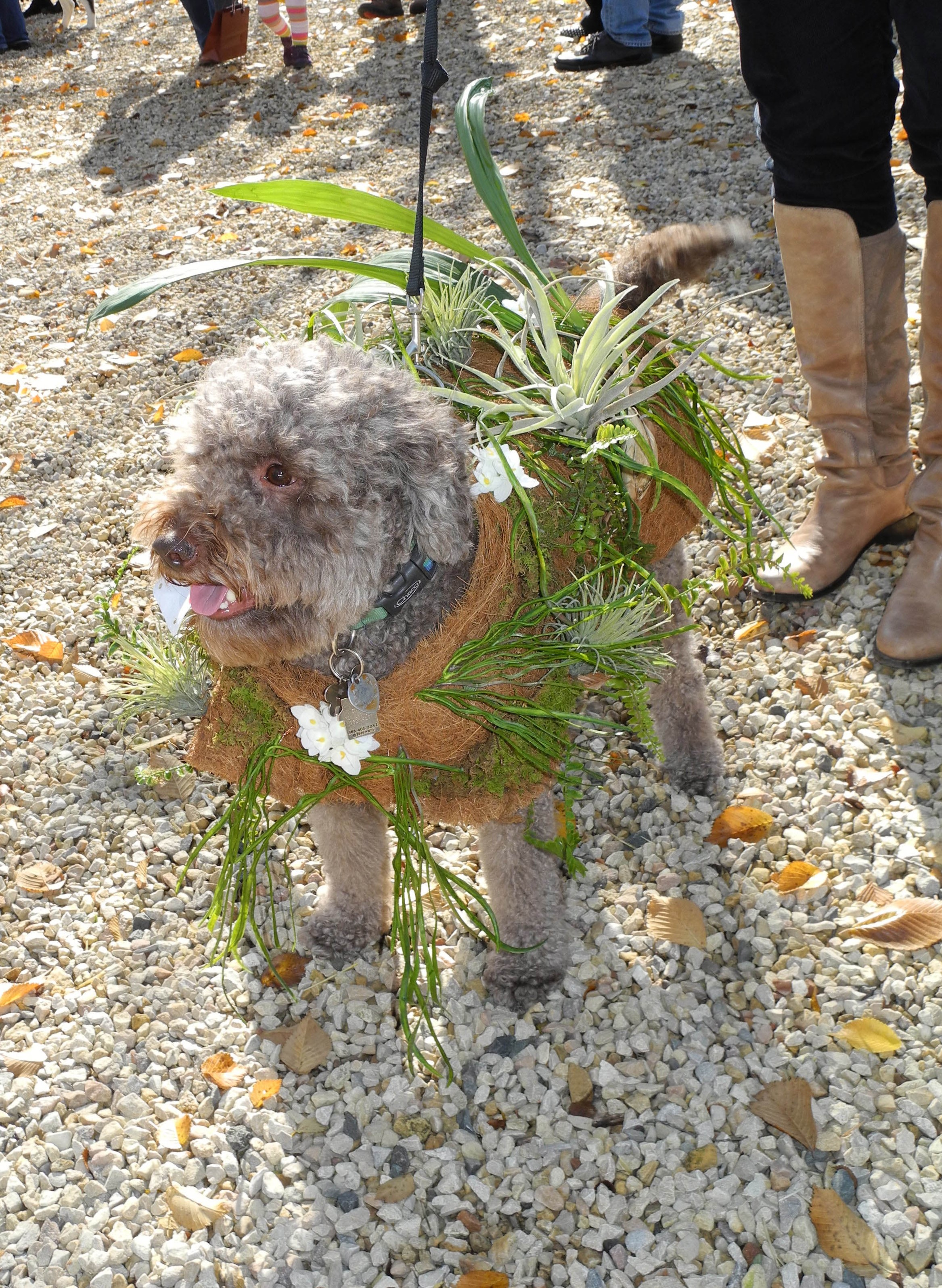 PHOTO: Dog is wearing a special coat that holds small house plants so he can take them for a walk