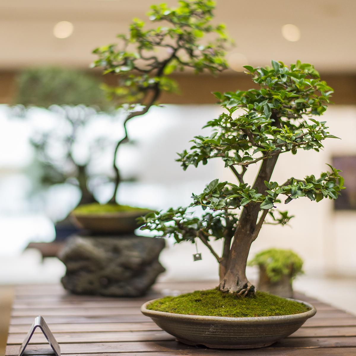Bonsai 360