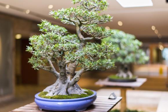 PHOTO: Bonsai 360-view.