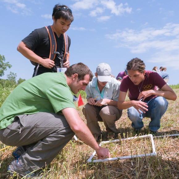 Conservation and Land Management (CLM) interns measure species density in the field.