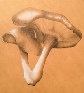 ILLUSTRATION: Shitake Mushrooms by Christina Lovering