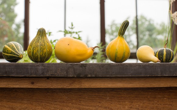 PHOTO: Small Mixed gourds.