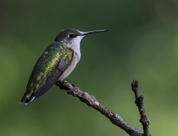 I was ready when this little one came back to it's favorite perch. ©Carol Freeman