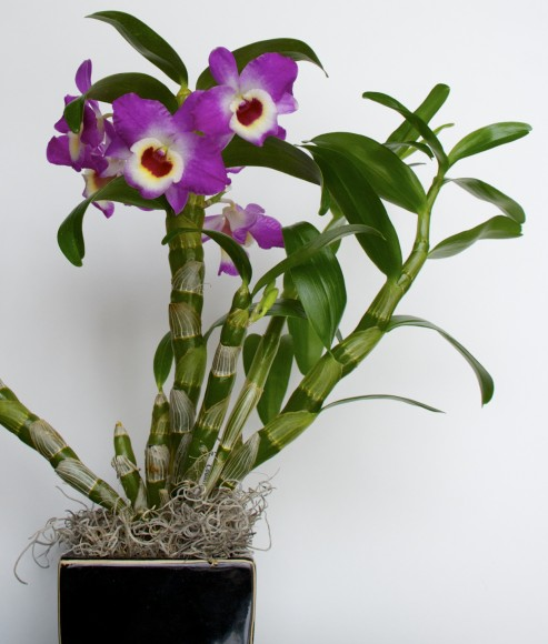 A healthy orchid.