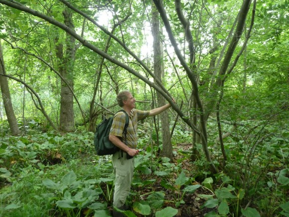 PHOTO: Andrew Bunting collecting sweet bay magnolia samples in Delhaas Woods, Bucks County, Pennsylvania.