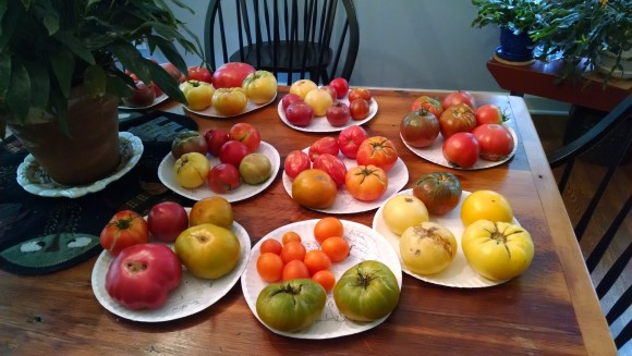 PHOTO: Heirloom tomato harvest, with cultivars labeled.