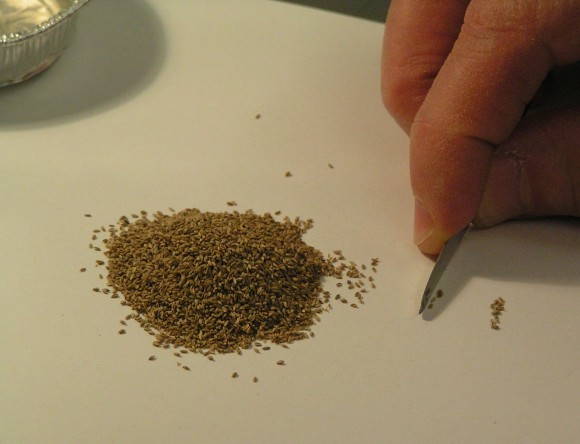 PHOTO: Closeup of a volunteer's hand moving seeds from a bulk pile to a smaller pile with tweezers.