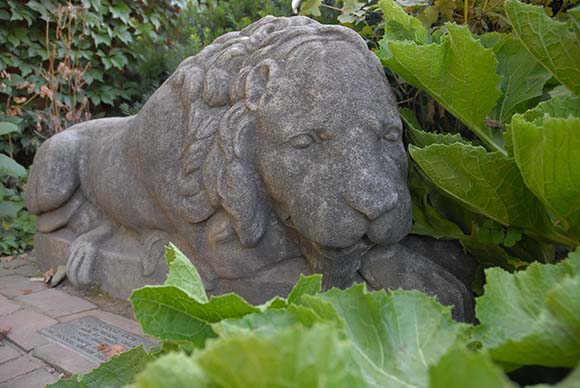 Cuddly Lion sculputure outside the English Walled Garden