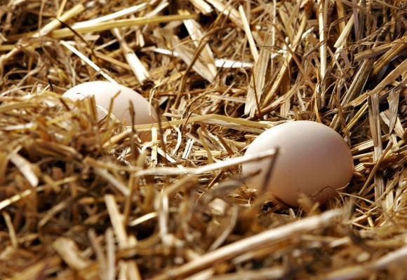 Eggs in straw.