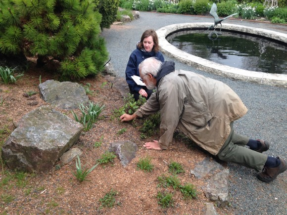 PHOTO: Emily Russell and Michael Dodge looking at alpine Salix in the rock garden.