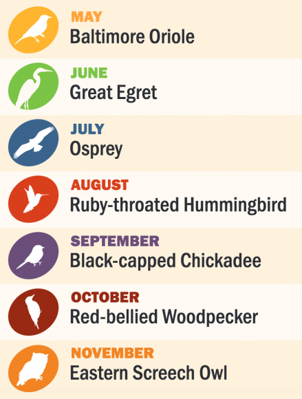 FPDCC Bird of the Month chart.