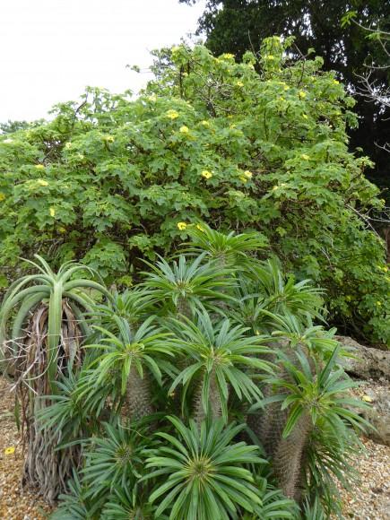PHOTO: Flora in the Madagascar Garden.