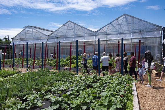 Visitors get a tour of the Farm on Ogden.