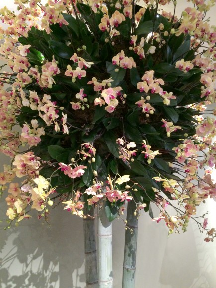 PHOTO: A blooming Phalaenopsis orchid tree in the exhibition.