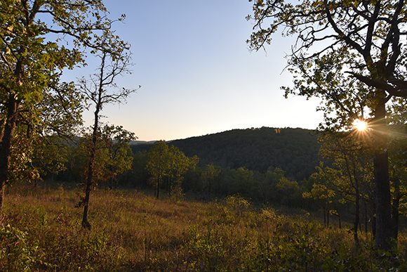 Glade opening at Roaring River State Park