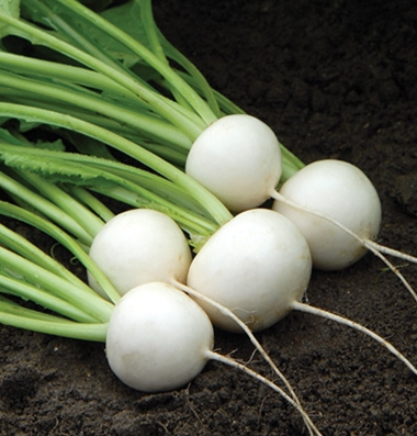 A bunch of white Hakurei turnips.