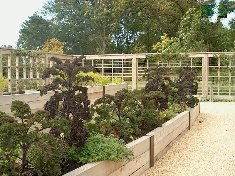 PHOTO: a variety of kale plants are growing in the raised beds of the Children's Growing Garden.