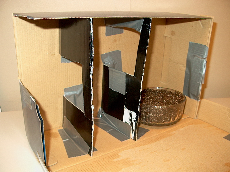 PHOTO: The maze assembly is shown in the shoebox. There are two dividers with cut out windows and a whole in the side of the box for light to shine sideways on the sprouting bean seeds.