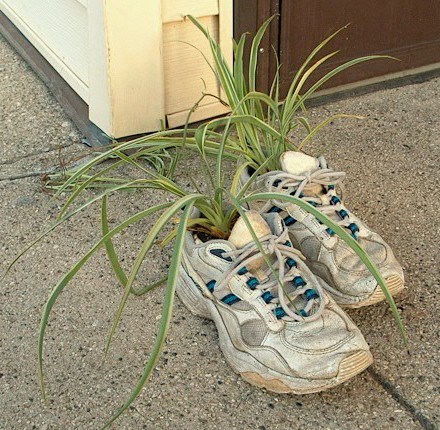 PHOTO: spider plants potted in worn athletic shoes, poised for a walk around the neighborhood