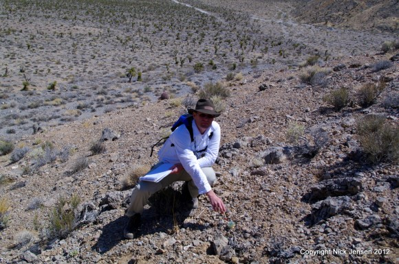 Dr. Still identifies rare plants in California.