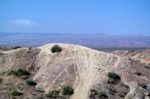 PHOTO: OHV damage to the habitat.