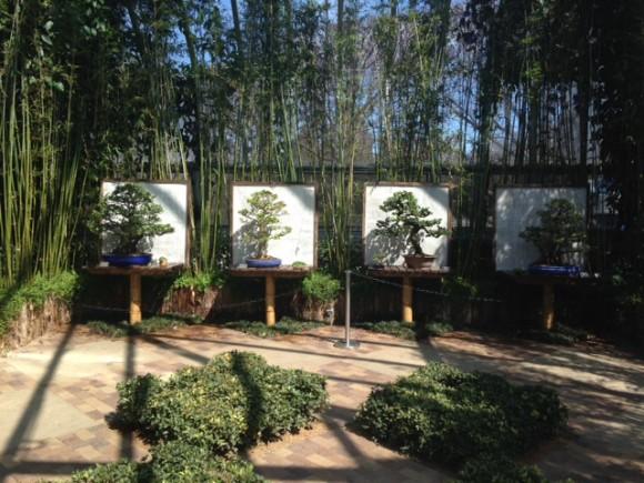 PHOTO: Bonsai on display in the Semi-tropical Greenhouse.