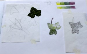 ILLUSTRATION: Ivy Leaf by Sophia Siskel