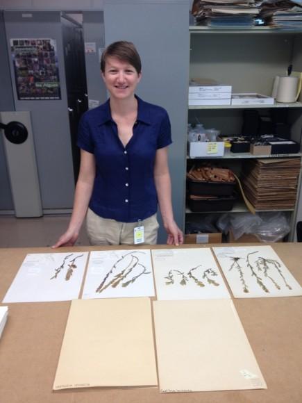 PHOTO: Adrienne Basey with herbarium specimens.