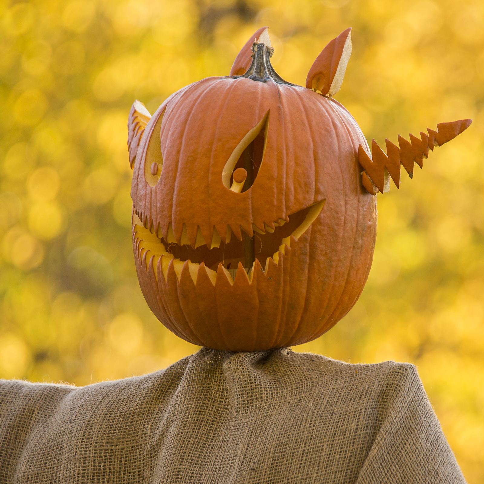 5 Fall Family Activities at the Chicago Botanic Garden