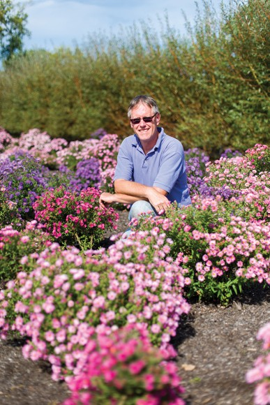 PHOTO: Jim Ault poses in a bed of bright pink- and purple-blooming asters he developed at the Garden.